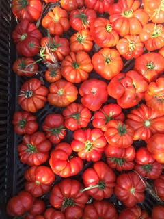 Tomatoes from Fertile GroundWorks in Livermore California