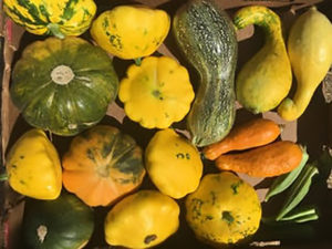 Summer Squash from Fertile GroundWorks